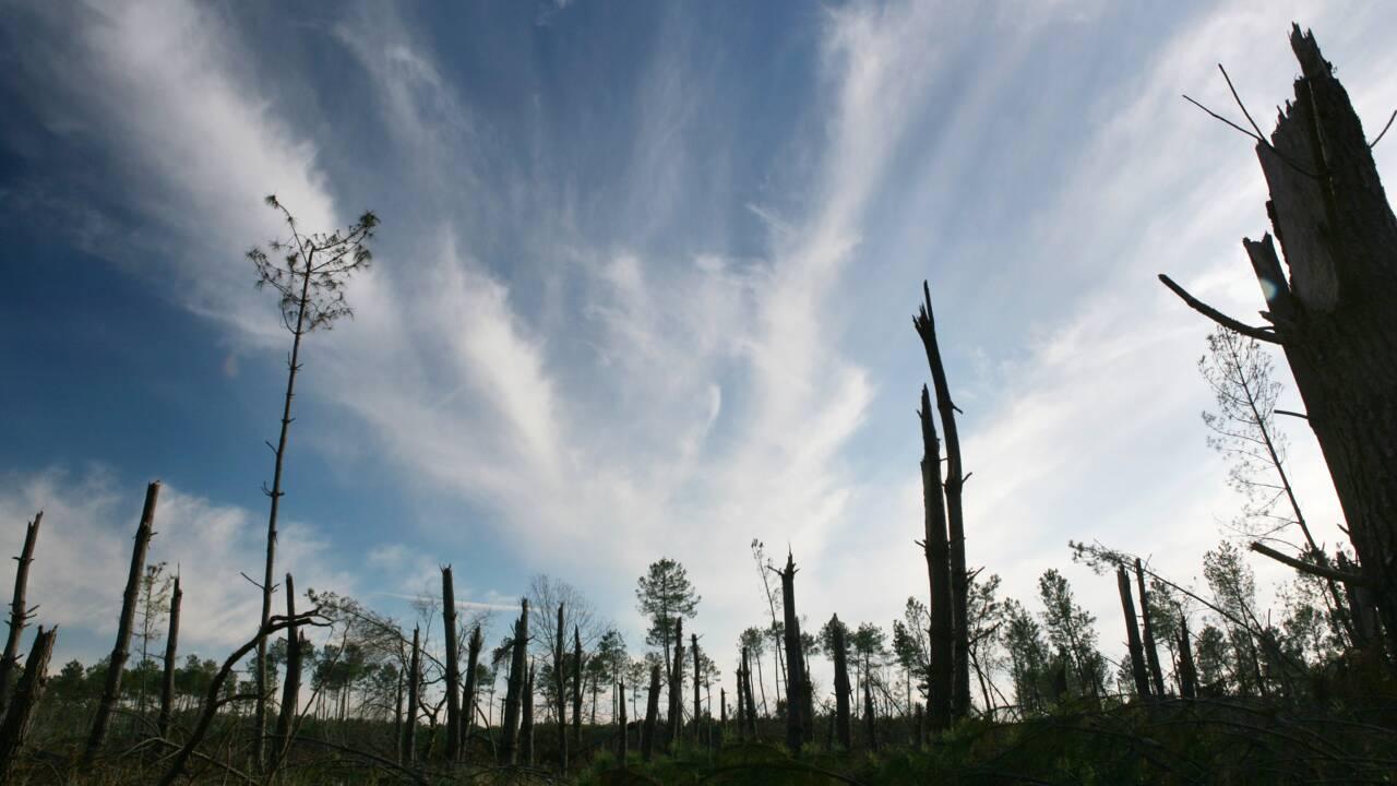Dix ans après la tempête Klaus, la lente repousse de la forêt landaise