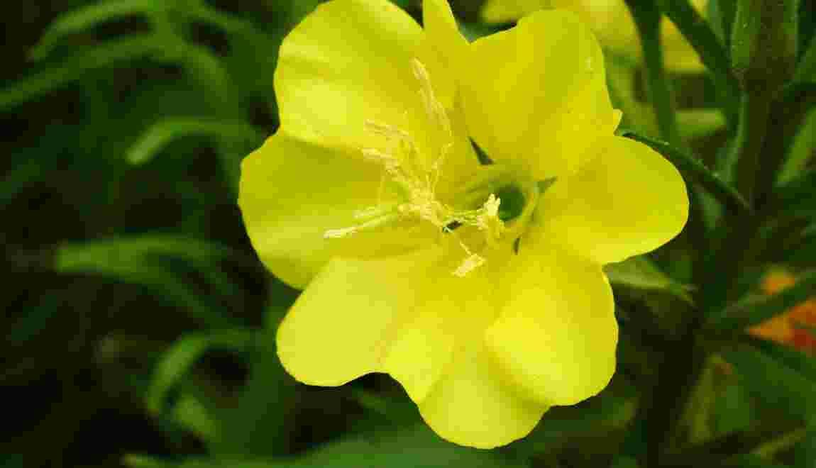 Les fleurs entendent et émettent des sons pour améliorer leur pollinisation