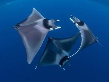 Les plus belles photos sous-marines récompensées par Ocean Art en 2018