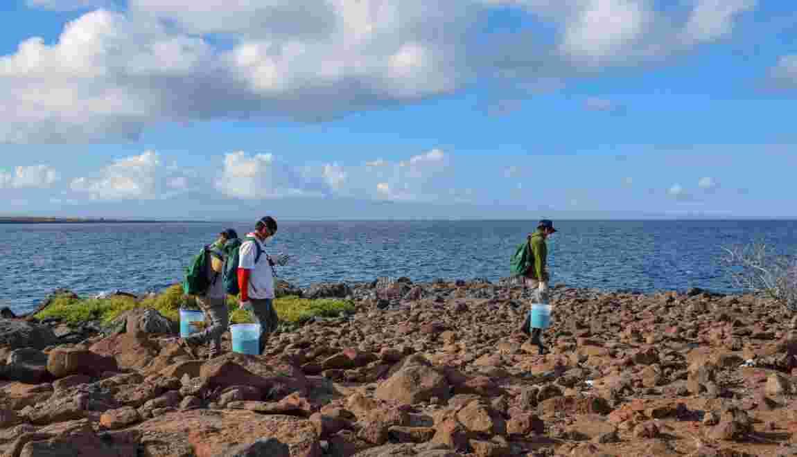 Les Galápagos en guerre contre les rats