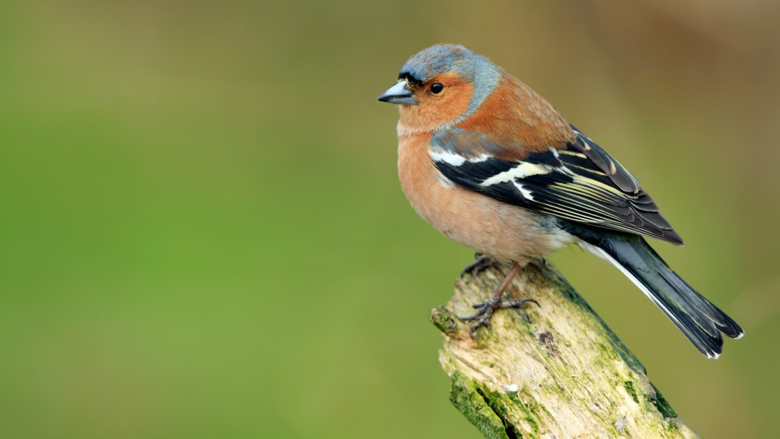 Ce week-end, la LPO vous donne rendez-vous au jardin pour compter les oiseaux