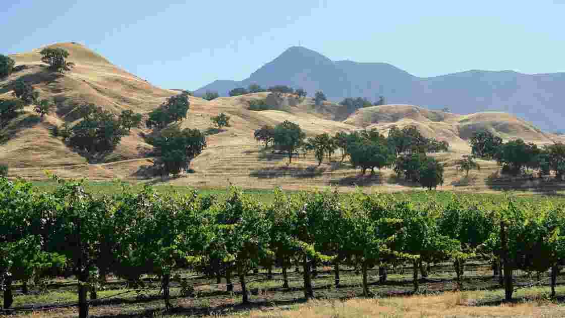 La vigne, à travers les siècles et les cultures