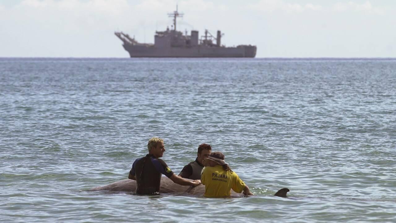 Le stress de la baleine à bec face aux sonars militaires