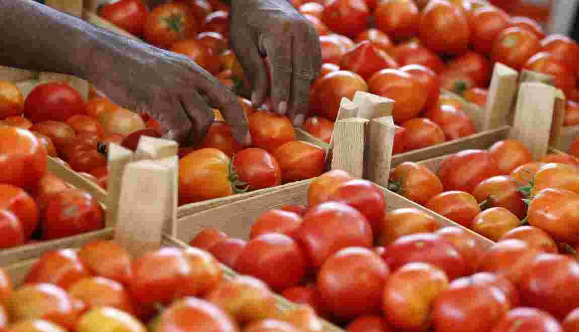 A Mayotte, des tomates contaminées par un insecticide interdit en France