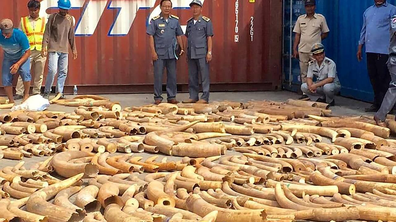 Ouganda: saisie d'ivoire et d'écailles de pangolin, deux Vietnamiens arrêtés