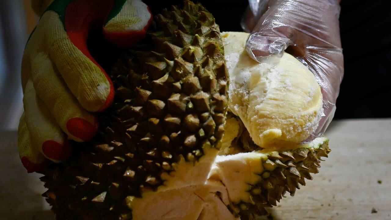 L'appétit chinois pour le durian menace les forêts de Malaisie