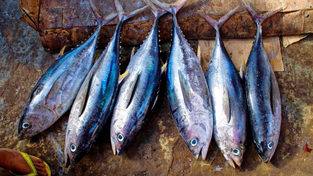 Quels produits de la mer peut-on manger sans nuire à la survie d'espèces ?