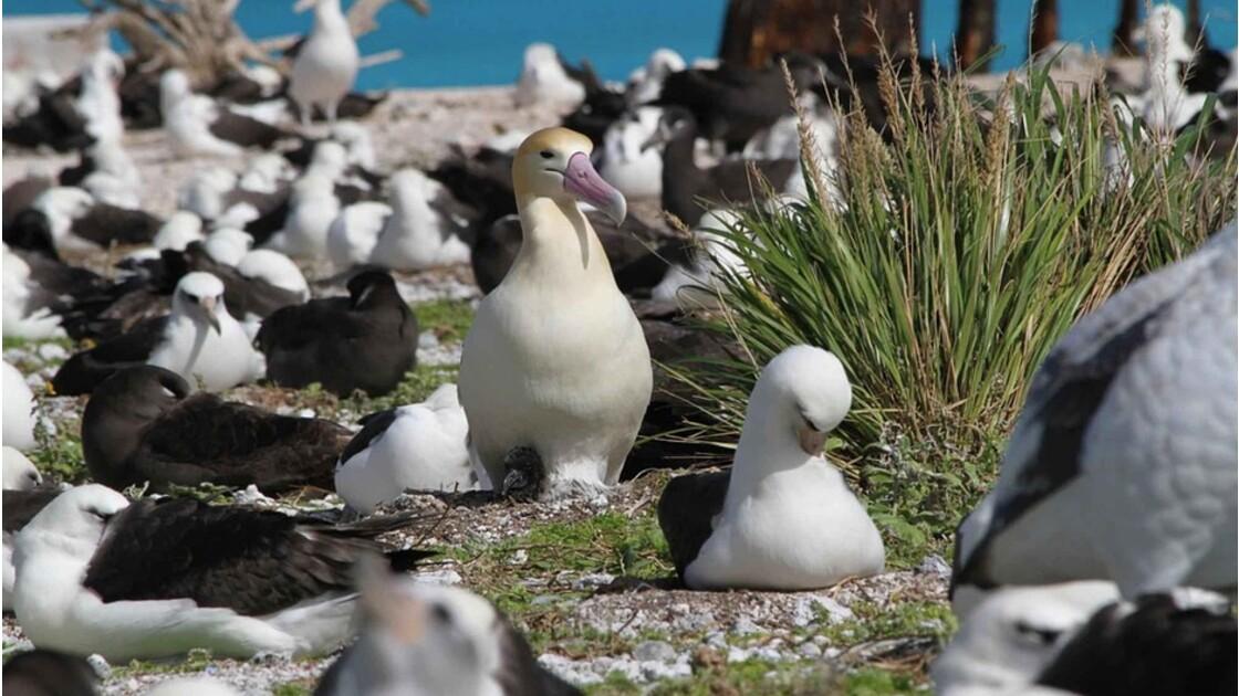 La pêche industrielle pourrait conduire à l'extinction de l'albatros
