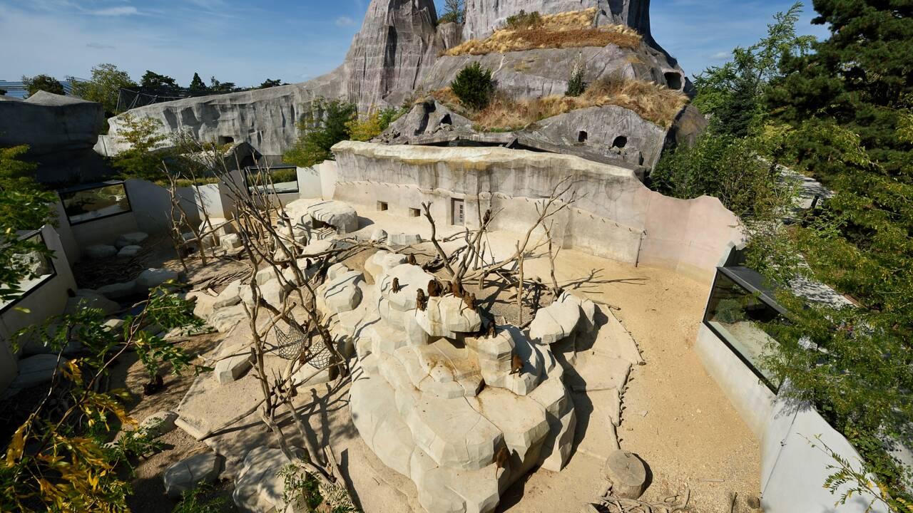 Passez une nuit dans le parc zoologique de Paris