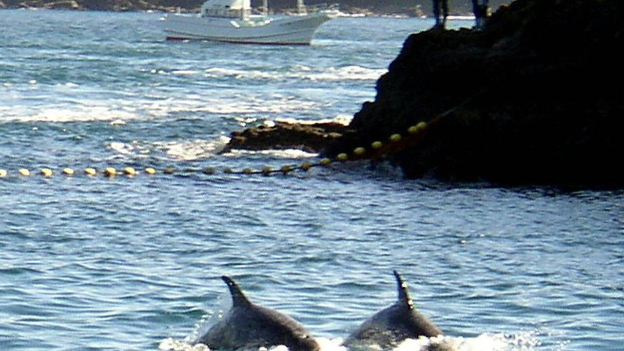 Action en justice contre la chasse au dauphin au Japon