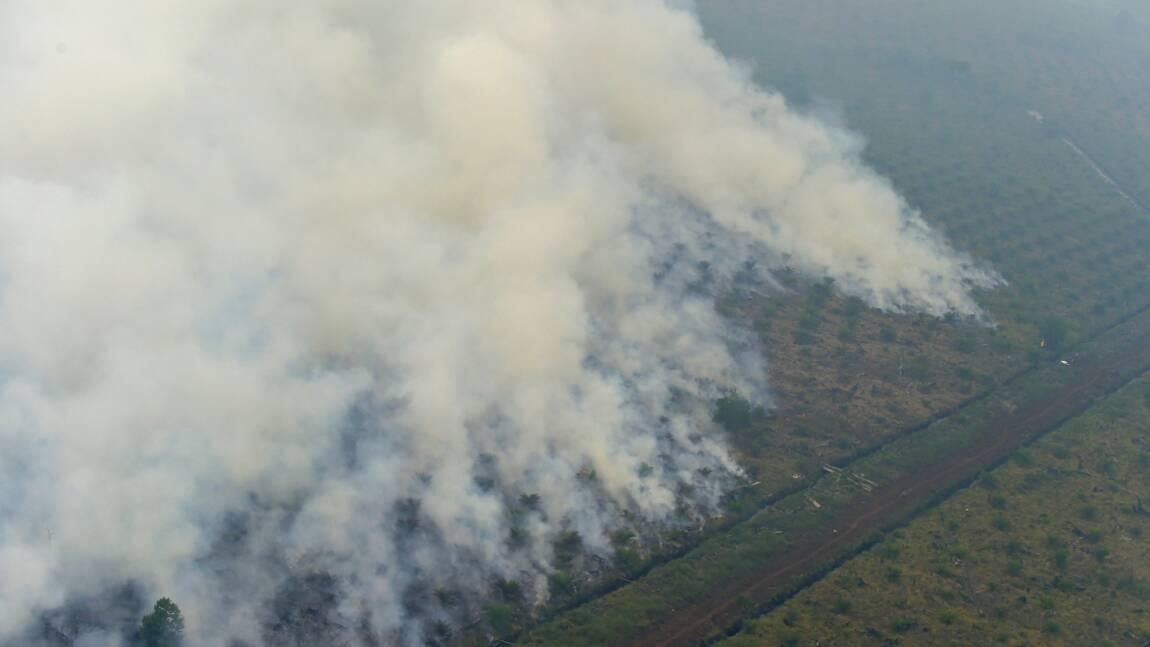 Déforestation en Indonésie: plus d'un 1,3 milliard de dollars d'amendes impayées, selon Greenpeace