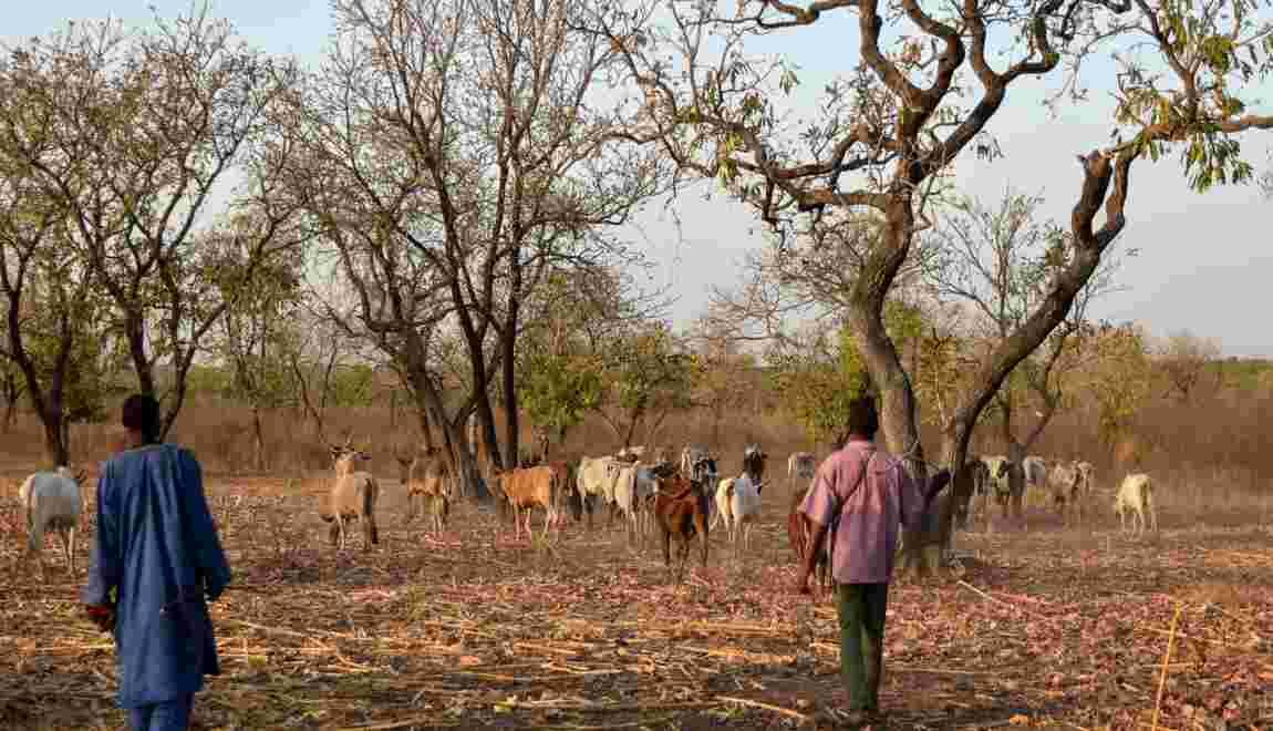 Parc de la Comoé en Côte d'Ivoire: l'écologie pour réconcilier paysans et éleveurs