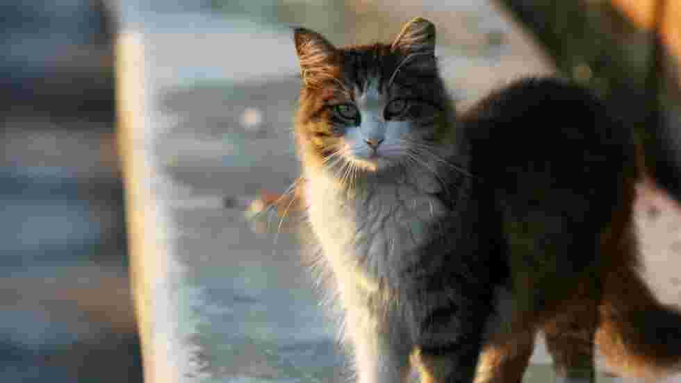 Comment Istanbul bichonne ses chiens et chats errants
