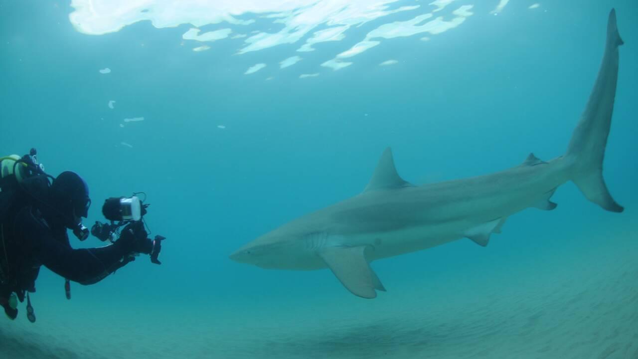 Avec l'hiver s'ouvre la saison des requins sur les rivages d'Israël