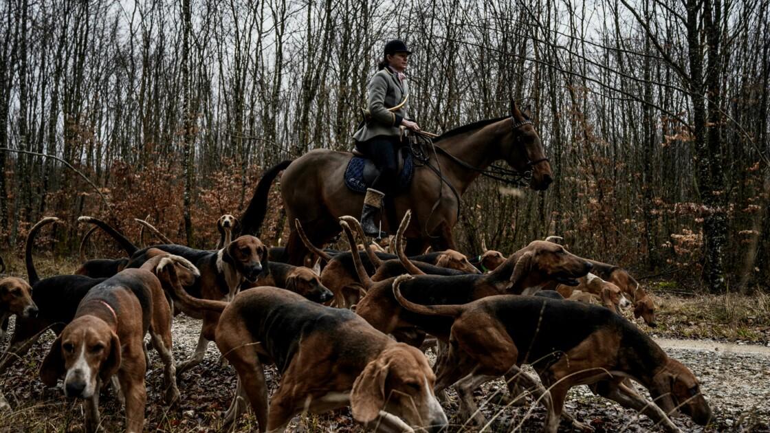 """Chasse à courre: un séjour découverte pour contrer les """"préjugés"""""""