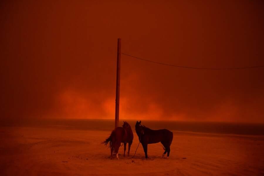 """Grands incendies en Californie : chevaux évacués à Malibu, le 10 novembre 2018 – Catégorie """"environnement"""""""