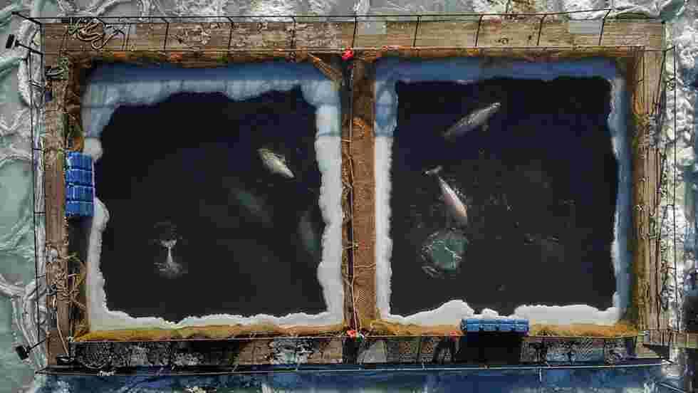 Russie : libération des derniers orques entassées dans des bassins