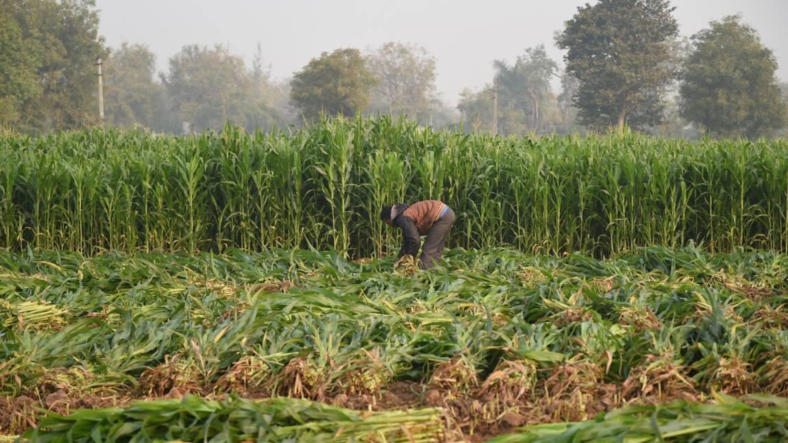 La diminution de la biodiversité pourrait entrainer une pénurie alimentaire