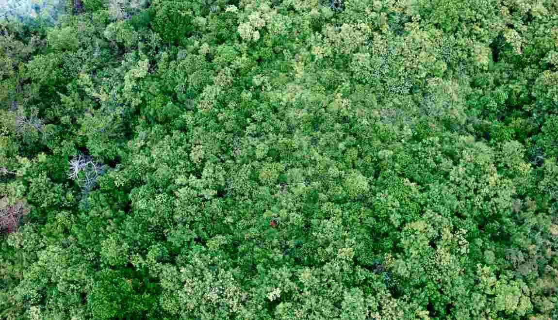 La Chine et l'Inde, participantes actives à la reforestation de la planète