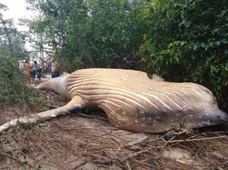 Une découverte inattendue en pleine forêt amazonienne