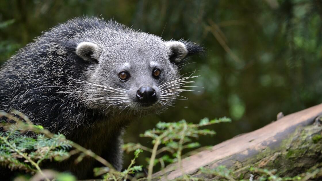 Pourquoi des centaines d'espèces menacées ne sont pas protégées