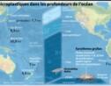 Des microplastiques retrouvés dans les crustacés des profondeurs de l'océan