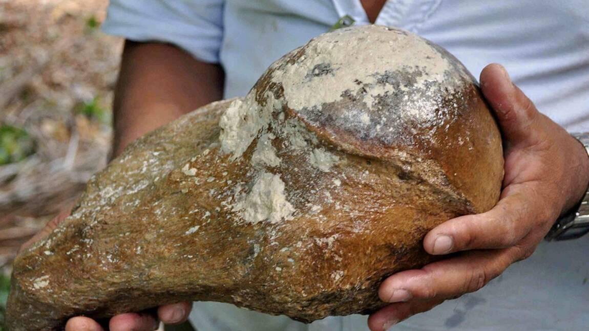 Un gouffre du Belize révèle les ossements d'un paresseux géant vieux de 27.000 ans
