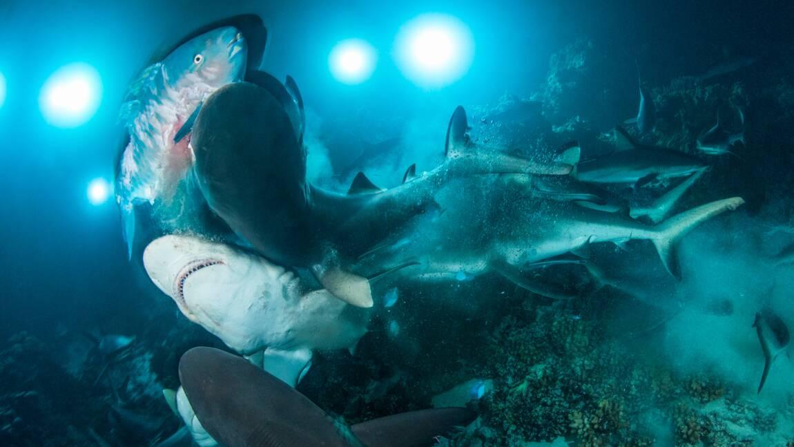 Les plus belles images sous-marines récompensées par l'Underwater photographer of the year
