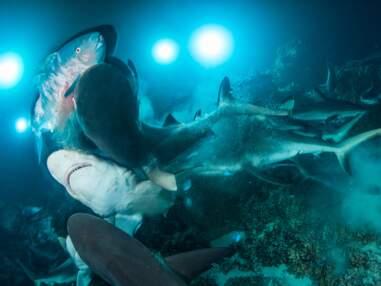 Underwater photographer of the year : les plus belles photos sous-marines de 2019