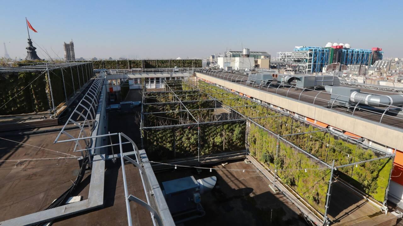 """Les """"Parisculteurs"""" qui font vivre l'agriculture urbaine dans la capitale"""