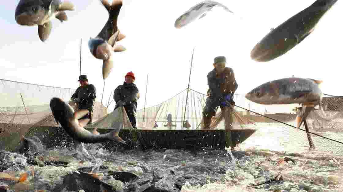 Pêche : le changement climatique aurait fait chuter certains stocks de poissons de 35%