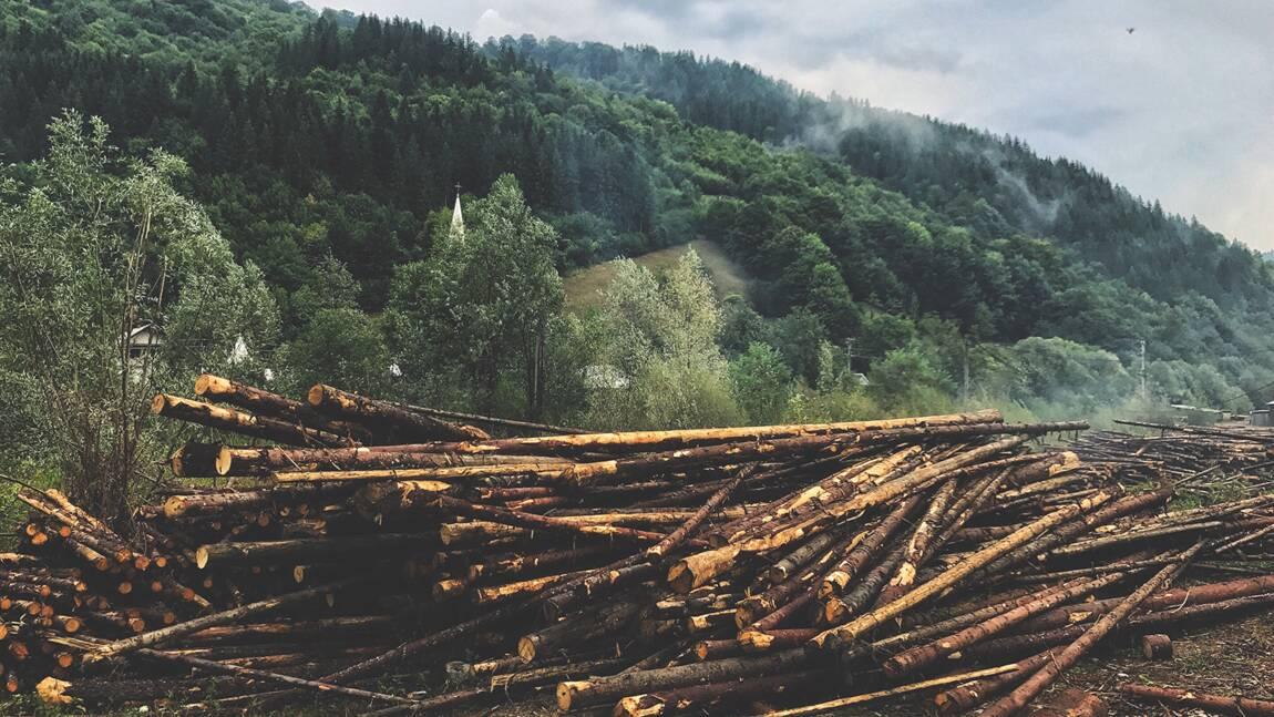 """Contre la déforestation, les arbres se mettent à """"crier"""" face aux tronçonneuses en Roumanie"""
