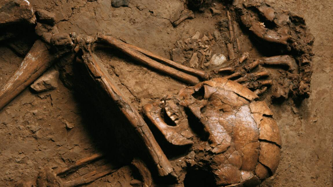 Il y a 6000 ans, les hommes vivaient déjà avec des chiens et étaient même enterrés avec