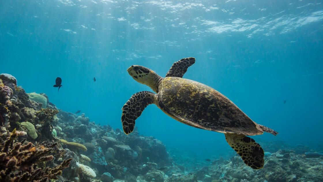 Etats-Unis : la politique environnementale du gouvernement Trump menace particulièrement 5 espèces animales