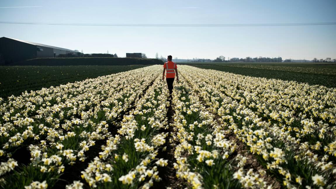 Les écolos s'inquiètent de l'impact du Brexit sur l'environnement