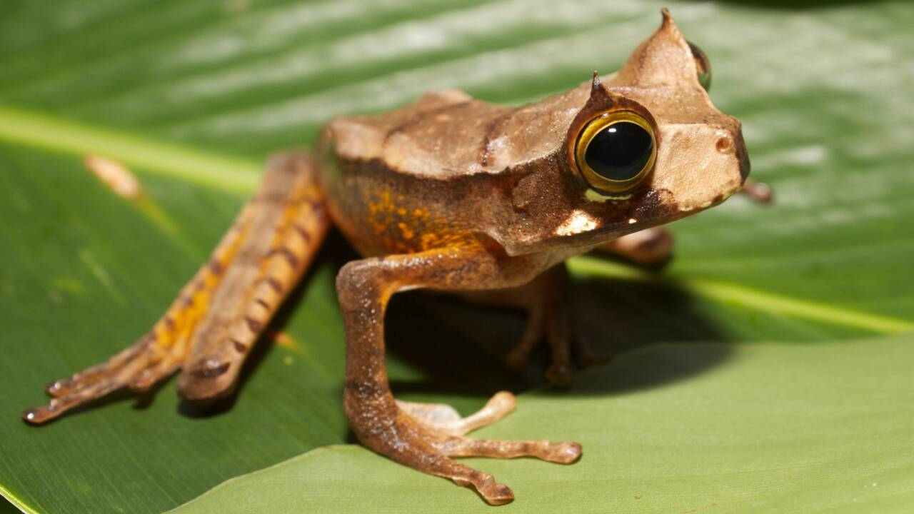 5 espèces que l'on pensait éteintes et qui n'ont en réalité jamais disparu