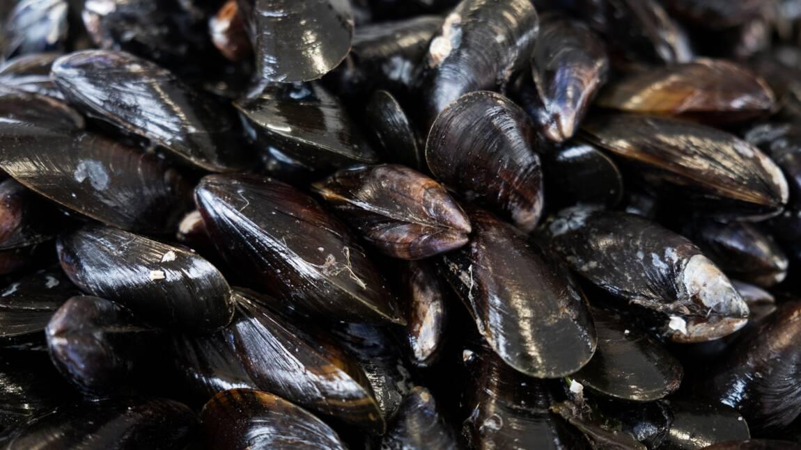 Sur-quota de pêche: 18 mois avec sursis pour un armateur du Crotoy
