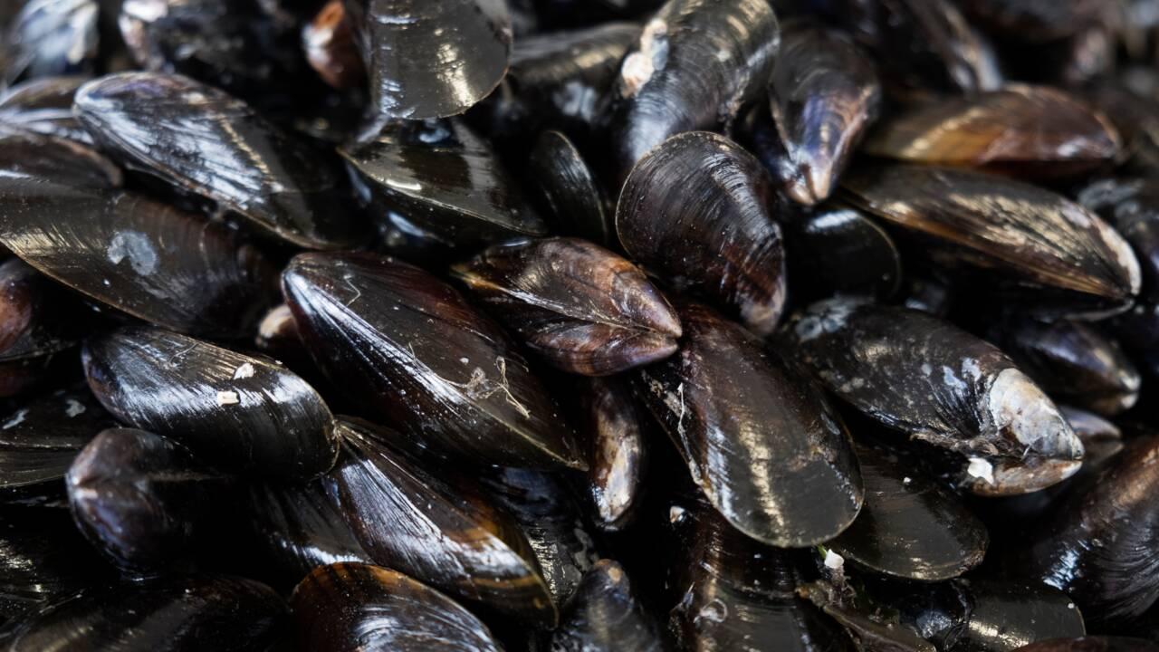 Un cancer infectieux chez les moules s'est propagé par le transport maritime