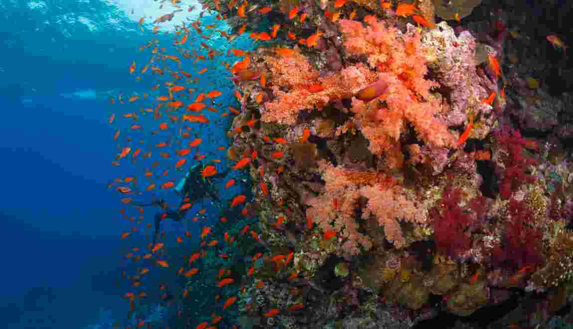 Italie : un large récif corallien découvert en mer Adriatique