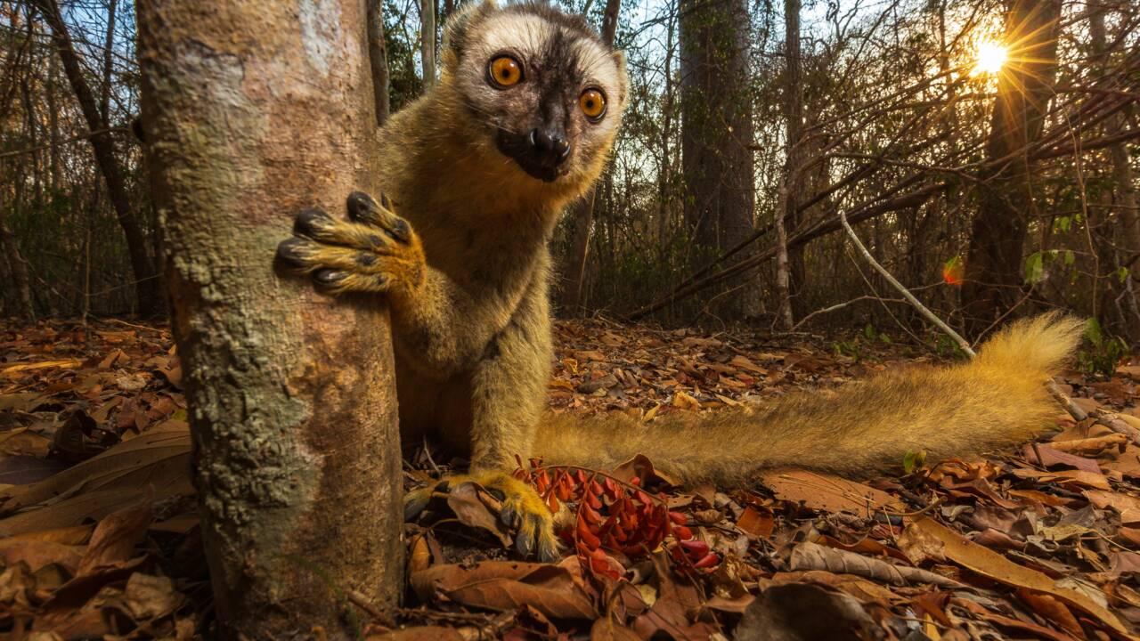 Votez pour les plus belles photos finalistes du concours du Smithsonian