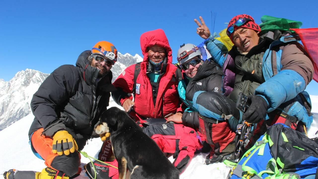 Un chien errant atteint le sommet d'une montagne de l'Himalaya en suivant une expédition