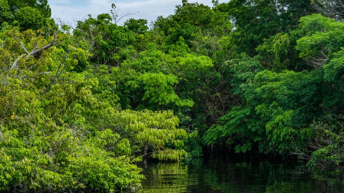 Environnement : ces 5 lieux qui ont désormais les mêmes droits que les humains