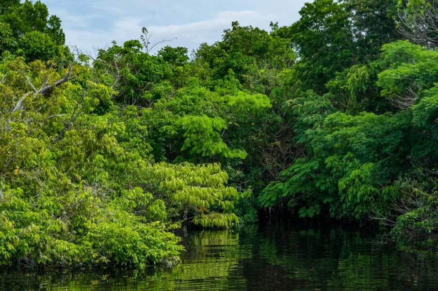 La forêt amazonienne colombienne