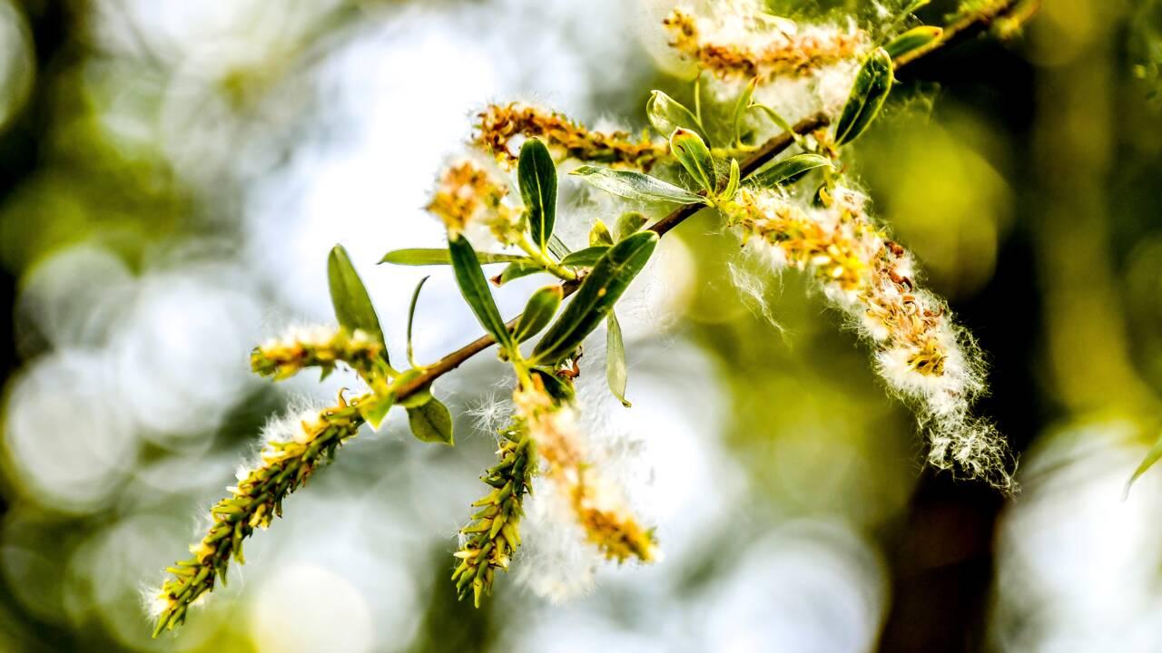 Réchauffement climatique : vers une augmentation des pollens et des allergies