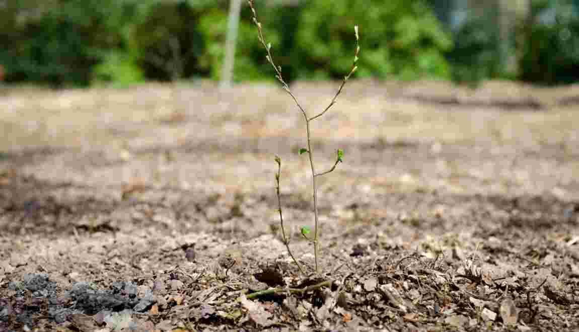 Reforest'Action, la start-up qui protège les forêts du monde entier