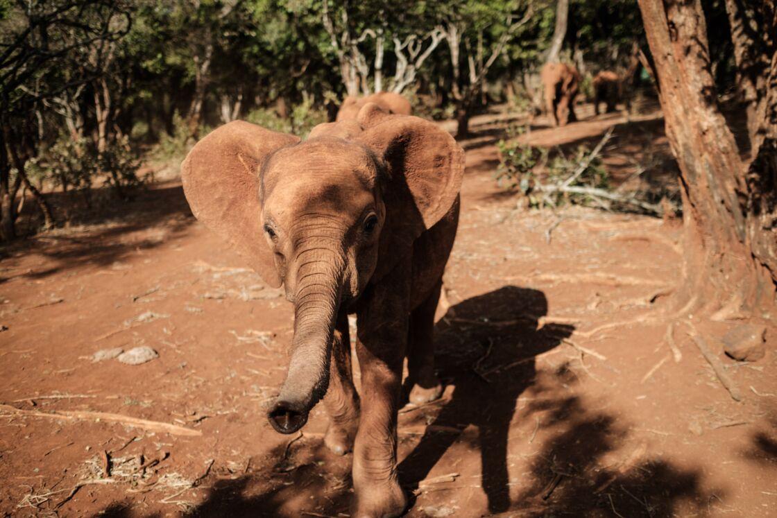 Daphne Sheldrick et l'orphelinat des Eléphanteaux - Partie 1 Thumbnail