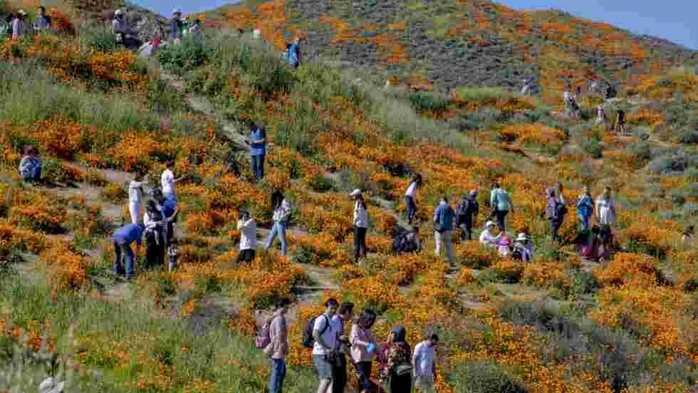 Des milliers de fleurs sauvages au sud de la Californie provoquent le chaos
