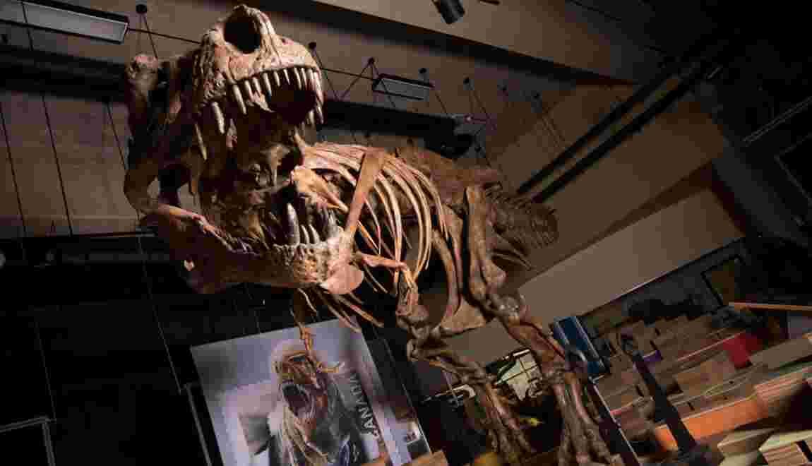 Scotty, le plus grand squelette de Tyrannosaurus rex jamais découvert