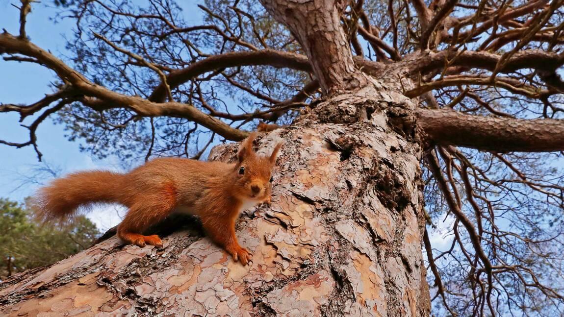 Royaume-Uni : les plus belles images de nature et de faune récompensées en 2018