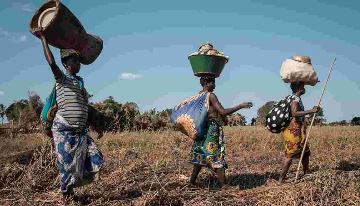 Au Mozambique, quand la branche du manguier a cédé et la vie d'Isabel basculé